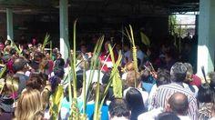 Participan cientos en bendición de palmas en la parroquia Cristo Rey | El Puntero