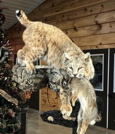 Coyote Mounts, Bobcat Mounts, Bear Mounts, Deer Hunting Decor, Deer Decor, Hunting Cabin, Taxidermy Decor, Taxidermy Display, Big Deer