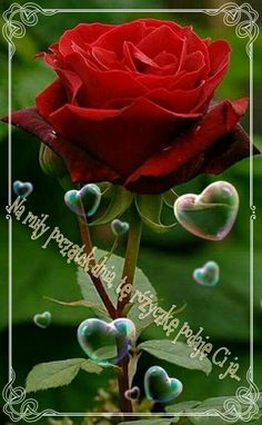Love Smiley, Cute Wallpapers, Good Morning, Plants, Red Flower Wallpaper, Red Flowers, Roses, Polish, Photo Illustration