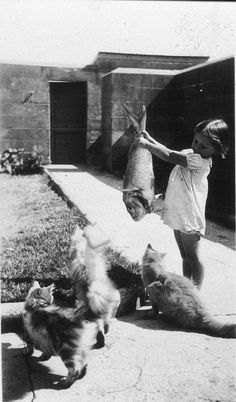Teasing the cats or feeding them?  #Vintage Photos #Cats #Fish