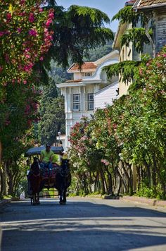 夏季的大島/王子島充滿休閒度假的氛圍,島上主要街道禁止車輛進入,只准觀光馬車和出租自行車穿梭其間。 ©Menekşe Fırtınna