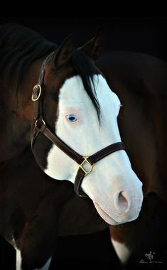 PRETTY BLUE EYES Colonels Lone Gun #Equestrian