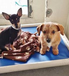 ★1/7/15 STILL THERE!★These 2 little buddies are still just puppies and the whole shelter experience is very overwhelming for them and they are so scared. Please take another look and SHARE so they can get out as soon as possible. Thanks! #A4788571 I'm an approximately 4 month old male min pinscher. #A4788569 I'm an approximately 5 month old male terrier. https://www.facebook.com/171850219654287/photos/pb.171850219654287.-2207520000.1420277157./354649014707739/?type=3&theater