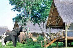Glamping in South Africa: Gorah Elephant Camp, Addo National Park. Photo by gorah.hunterhotels.com