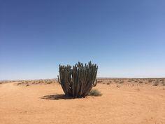 Random cactus plant in the Namib Desert (Sept 2016) - Photo taken by BradJill