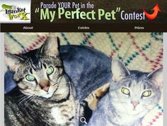 """Mulder & Scully"" - Click here to vote for your favorite entry! http://www.myperfectpetcontest.com  and for more great ways to showcase your photo memories visit BlanketWorx"