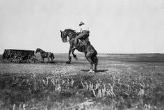 "Cowboy riding a bucking bronco on Billy Cochrane's ""CC"" ranch, Mosquito Creek, Alberta. Date: 1901"