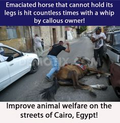 Plz sign petition: Emaciated horse that cannot hold its legs is hit countless times with a whip by callous owner