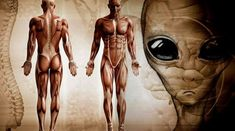 Scientists concludes Humans did NOT evolve alongside OTHER life on Earth - Alien UFO Sightings Ancient Aliens, Aliens And Ufos, Sistema Solar, Objets Antiques, The Pleiades, Early Humans, Ufo Sighting, Another World, Illustrations