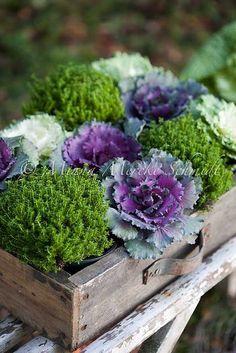 Simple Details: frilly ornamental cabbage for fall   September 13, 2015   http://simpledetailsblog.blogspot.com/2015/09/frilly-ornamental-cabbage-for-fall.html via dorothysueandmillieb.blogspot.com
