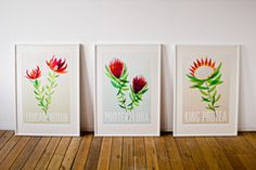 Proteaflora | Laura Cameron