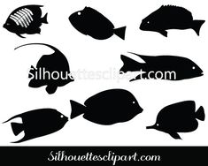 Beautiful coral fishes are added to this Coral Fish Silhouette pack. Ideal for fish vector illustrations as well as water related designs. Fish Clipart, Fish Vector, Fish Graphic, Silhouette Clip Art, Vector Graphics, Vector Design, Diy Art, Coral, Creatures