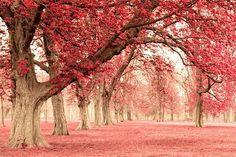pink autumn <3