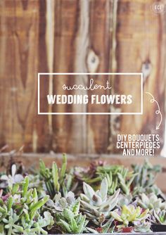 succulent wedding flowers