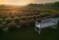 Washington Island, WI - Lavender Farm - The beautiful farm is fragrant and peaceful and invites you to sit and enjoy the relaxing setting. Dream Vacations, Vacation Trips, Vacation Spots, Beautiful Farm, Beautiful Pictures, Towns In Wisconsin, Washington Island, Garden Bridge, Decoration
