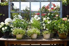 Table top with pots in cottage-style garden in Small Garden Design Ideas - the…