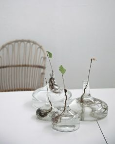 Clear glass vases displaying beautiful plant roots- in the atelier of Carina Seth Andersson Indoor Garden, Indoor Plants, Potted Plants, Small Plants, Water Plants, Indoor Outdoor, Outdoor Living, Terrariums, Plantas Indoor