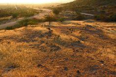 Ash Mound
