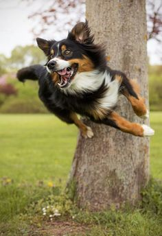 12 Border Collies Totally Defying The Laws Of Physics #bordercollie