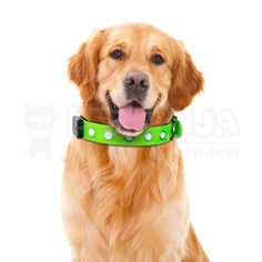 With 6 small led lights, bright enough to keep your dog highly visible at night, fog or other dark environment. With this dog safety collar, your dog will be much easier to spot in the dark, highly visible to other walkers, joggers, cyclists and motorists etc. Small Led Lights, Pet Collars, Dog Accessories, Dog Gifts, Dog Toys, I Love Dogs, Your Dog, Dog Lovers, Dog Safety