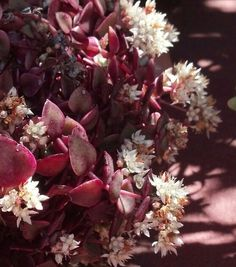 Succulent in bloom (1 of 6)