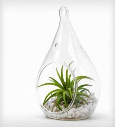 Zen Teardrop Terrarium | Home Decor | Roots in Rust | Scoutmob Shoppe | Product Detail