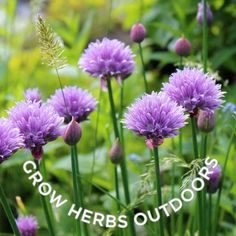 Here's a list of herbs you can grow indoors in your home all year-round, including both annual and perennial plants. Grow your own kitchen garden right in your kitchen! Growing Sunflowers, Growing Fruit Trees, Growing Seeds, Lavender Plant Care, Growing Lavender, How To Propagate Lavender, Hydrangea Care, Hydrangea Plant, Growing Sweet Peas
