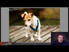 Pet Portrait Tips, Lens Calibration, Get Photos Right in Camera - Keep Shooting! Monday #9 - YouTube