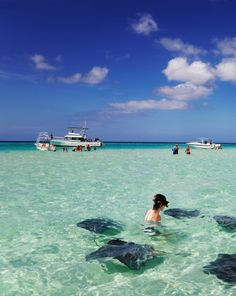 Feed and swim with stingray at Stingray City, Grand Cayman. #caribbean #cruise