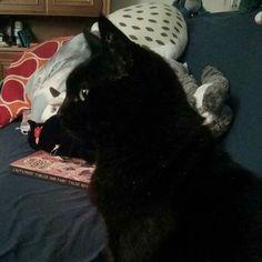 Sora parece una estatua. :) #gatonegro #gato #sora #gatanegra #blackcat #cat #catsofinstagram #lovelycat #gatosdeinstagram #gatosdelmundo #pelusa #pelusanegra #amordegato #catslove #catslover #catstagram #catexperience #gatovago #catoftheday #crazycatlady #caturdays365