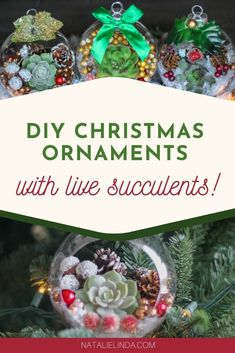 Learn how to make these beautiful DIY Christmas ornaments for your Christmas tree this year! They feature live succulents and are the perfect way to incorporate something new and fresh into your Holiday decor! Diy Christmas Ornaments, How To Make Ornaments, Christmas Balls, Christmas Tree, Craft Tutorials, Diy Projects, Craft Ideas, Succulents Diy, Beautiful Christmas