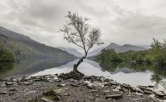 The Lonely Tree, llyn padarn, llanberis ( 5998 x 3724 ) by Ste Clayton : EarthPorn