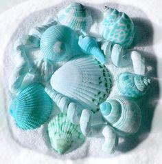 beautiful aqua shells...