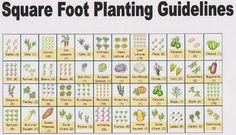 square-foot-planting-guide1.jpg (856×492)