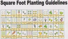 Square Foot Planting Guide ~ Vegetables are at their best when purchased in season. This seasonal chart gives you a good idea of when to buy. For example, cucumbers and zucchini are in season from March to September and beets are year round.