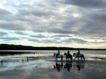 Book your horse riding or horse safari adventure today with Bhangazi Horse Safaris in iSimangaliso Wetland Park, KwaZulu-Natal - Dirty Boots Beach Rides, Wetland Park, Safari Adventure, Kwazulu Natal, Adventure Activities, Game Reserve, Horse Riding, Buffalo, Around The Worlds