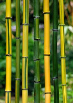 The best choice bamboo