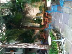 New Orleans courtyard. Palm tree or palmetto in a center raised bed. Patio lights . (Add a hammock?)