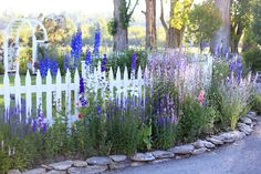 Cottage Gardens Cottage Garden with White Picket Fence and Arbor - Blue Delphinium and Purple Sage Flowers Picket Fence Garden, White Picket Fence, Garden Fencing, Picket Fences, White Fence, Blue Garden, Dream Garden, Garden Yard Ideas, Garden Landscaping