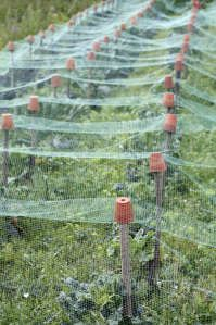 Image detail for -Organic Vegetable Patch with Garden Netting Protecting Vegetable Crop