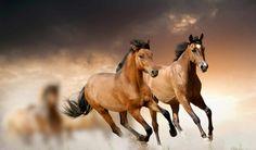 лошади, живые, run, android,