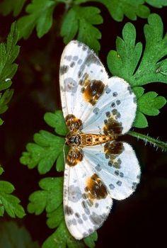 Natureza impressionante do ~ dos borboletas