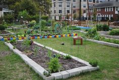 Lucy's in the Garden: Houston's Allotment Garden ~ Midtown Community Garden