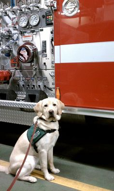 Yumi at the fire station.  Picture sent to me by Jen who took her on the outing.  Yumi had a great time!