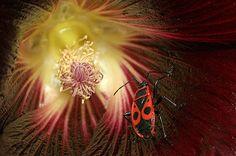 Red bug by Uros Kotnik