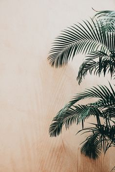 Aesthetic Backgrounds, Aesthetic Iphone Wallpaper, Aesthetic Wallpapers, Plant Aesthetic, Beige Aesthetic, Boho Chic Interior, Interior Design, Lightroom Presets, Wall Collage