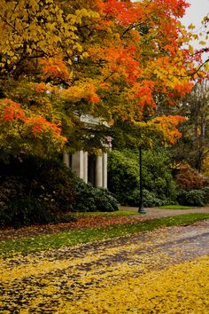 OSU hall in Fall...the campus is gorgeous in autumn!