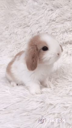 Cute Wild Animals, Baby Animals Super Cute, Cute Little Animals, Cute Funny Animals, Cute Cats, Cute Bunny Pictures, Baby Animals Pictures, Cute Animal Pictures, Cute Baby Bunnies
