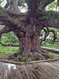 Great garden tree