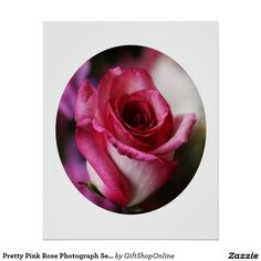 Pretty Pink Rose Photograph Set In A Circle Poster